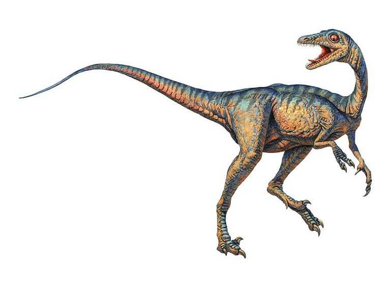 Dinosaur names - Troodon