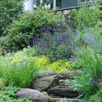 Low-Maintenance Plants Hillside Landscaping