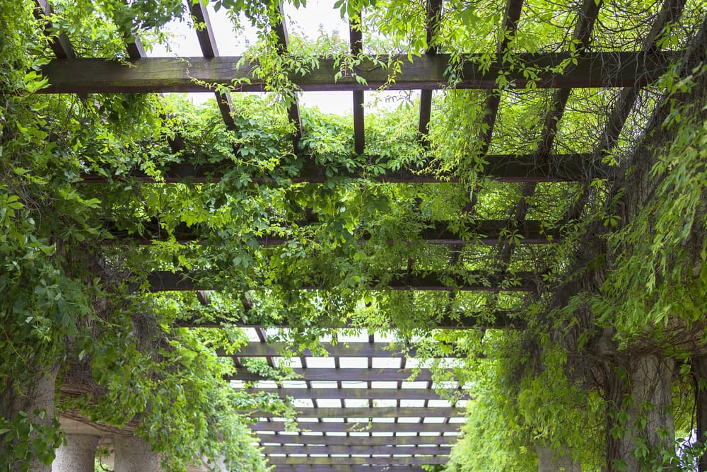 Natural Pergola Cover Ideas with Greenery